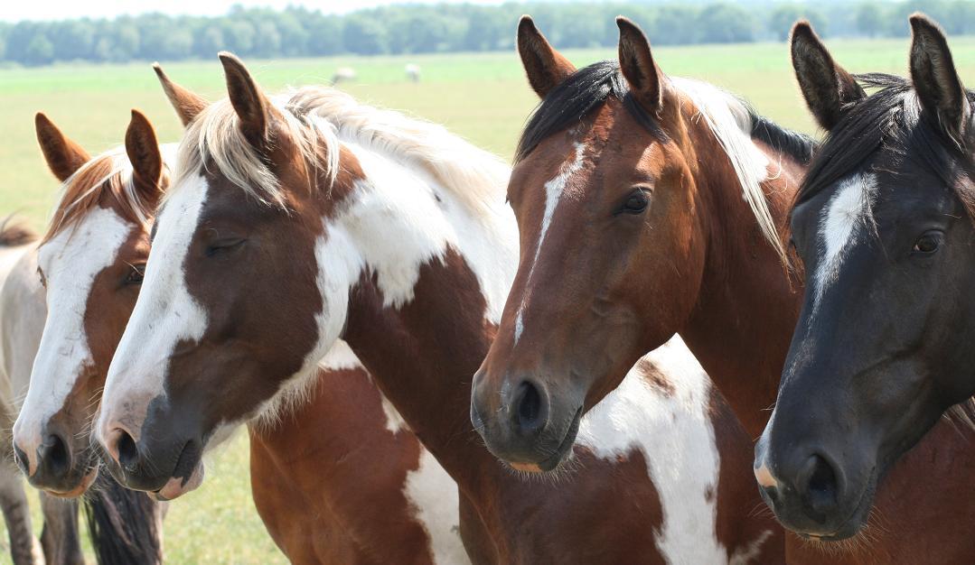 De Paarden El Rancho De Verano
