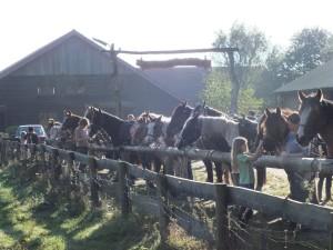 bij de ranch
