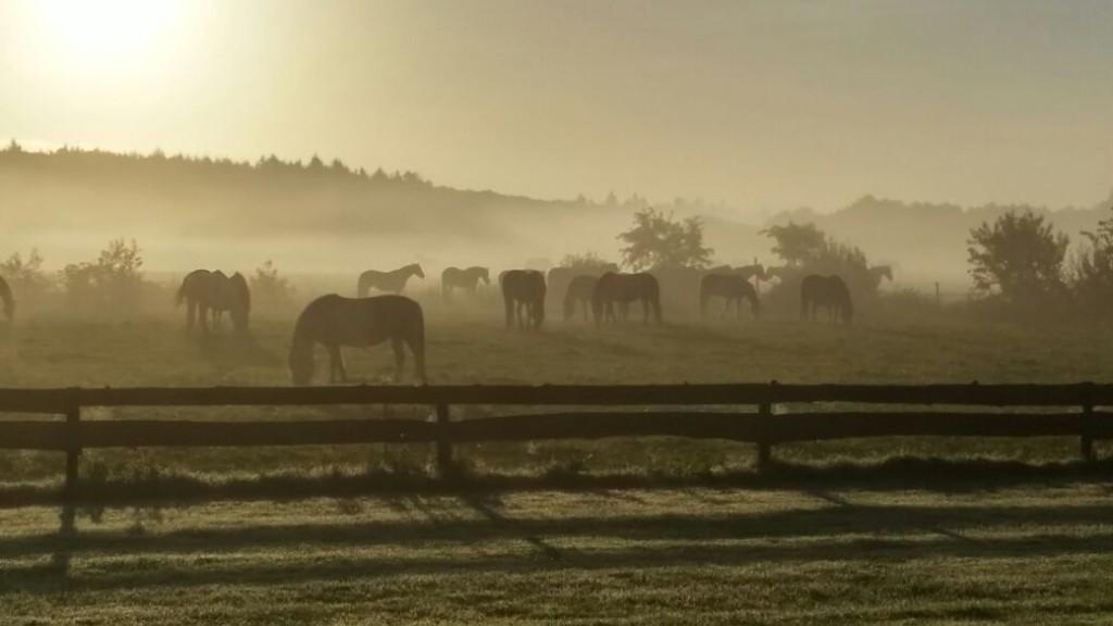 uitzicht uit de ranch